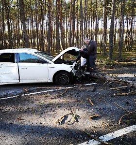 Išgėrusi moteris kelyje Smiltynė–Nida nukirto du medžius: automobilis – nepataisomas