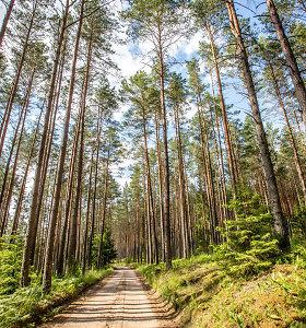 Miško pardavėjams palankiausias metas parduoti – dabar