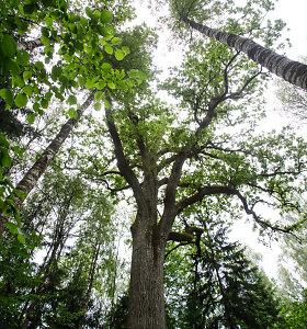Panevėžys ieško rangovų Skaistakalnio parko rekonstrukcijai