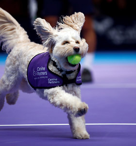 Konkurencija kamuoliukų padavinėtojams – jais tapo mieli šunyčiai