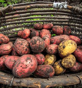 Tyrimas: labiausiai brango bulvės, pigo – obuoliai