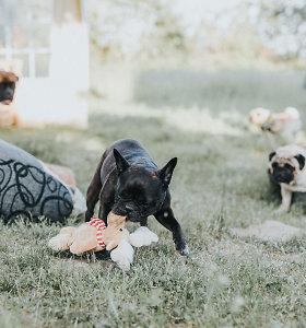 """I.Pileckienė: """"Pirmąjį šunų reabilitacijos centrą galime įkurti tik visi susitelkę"""""""