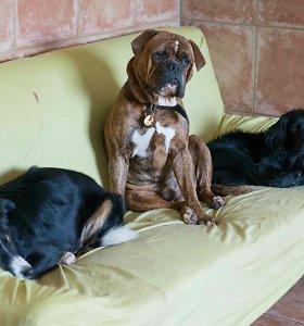 Įspūdžiai apie šunų namus Vilniuje: vieni prarado gyvūną, kiti neatsidžiaugia rūpesčiu