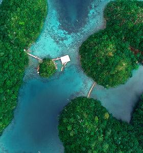 Nori baigti studijas? Filipinuose privalėtum prieš tai pasodinti 10 medžių