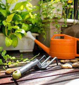 Daržas ir sodas balkone: čia gali augti nuo krapo iki obels. Agronomo T.Gursko patarimai