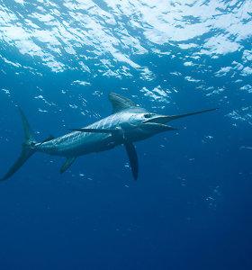 Ryklys prie Didžiojo barjerinio rifo sužalojo du britų turistus