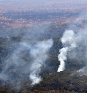 Australijos krūmynų gaisrai sukėlė rimtą pavojų nykstančioms rūšims