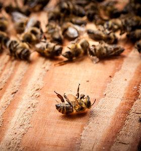 """Naujausio tyrimo išvados: """"Roundup"""" žudo bites"""