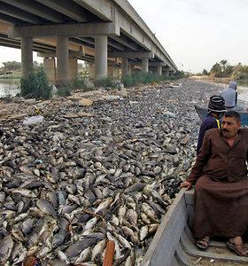 Irake mįslingai nugaišo tūkstančiai karpių