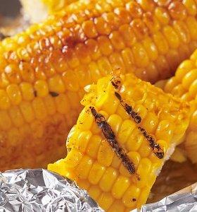Smagu ir sveika patriaukšti: keptos kukurūzų burbuolės