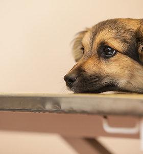 Išvadavusi skriaudžiamą šunį, geradarė sulaukė bauginimų