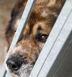 Biržų rajone girtas šeimininkas mirtinai nukankino savo šunį