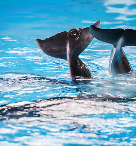 Delfinų terapijos centras: terapija, atverianti neįgaliukams naujus horizontus