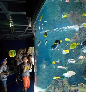 Jūrų muziejuje artimiausias savaitgalis skiriamas meilei