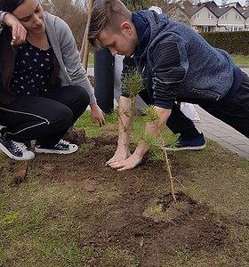 """Projektas """"Pušys Klaipėdai: tūkstančiai pasodintų, tačiau mažai prigijusių pušelių"""