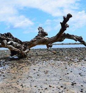Mėlyna jūra, žydras dangus ir neteisingas Dievas