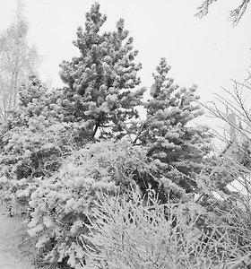 Per Lietuvą keliauja žiema