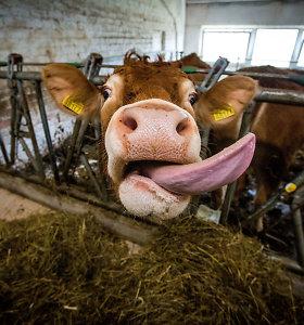 Dėl karščių stabdomas ūkinių gyvūnų pervežimas tolimais atstumais