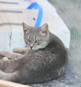 Šiaulių pareigūnai išsiaiškino, kas ir už kiek skandino kačiukus