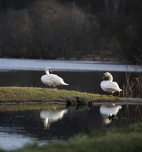 Pirmadienį Lietuvoje oro temperatūra pakilo iki dviženklių laipsnių