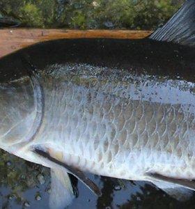 Sugauta seniausia pasaulyje gėlavandenė žuvis, plaukiojusi seniau už Titaniką