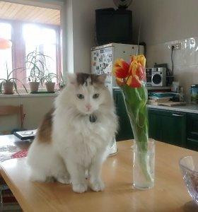 Turniškėse dingo katinas: gal matėte?