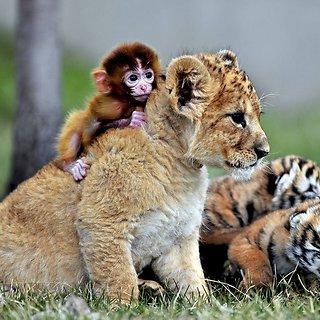 Elgesio su gyvūnais etika
