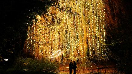 Nuostabiausio metų laiko stebuklai prasidėjo: atidarytas 1,5 mln. lempučių išpuoštas Kalėdų sodas
