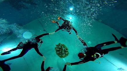 Klaipėdoje narai eglutę papuošė 9 metrų gylio baseine