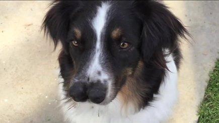 Dvi nosis turintį šunį priglaudusi pora neatsistebi jo uosle