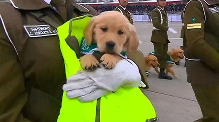 Žiūrovus pavergė kariniame parade dalyvavę auksaspalvių retriverių jaunikliai