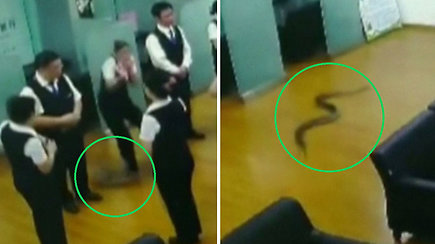 Nuo lubų nukritęs pitonas ne juokais išgąsdino banko darbuotojus