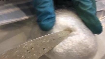 Kauno kriminalistai surado 1 kg kruopščiai paslėptų narkotikų