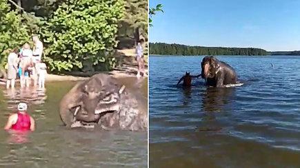 Visagino poilsiautojai negalėjo patikėti savo akimis: ežere maudėsi dramblys