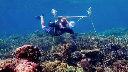 Išgirskite patys: mokslininkai sugalvojo būdą, kaip apgauti žuvis ir atgaivinti mirštančius koralų rifus