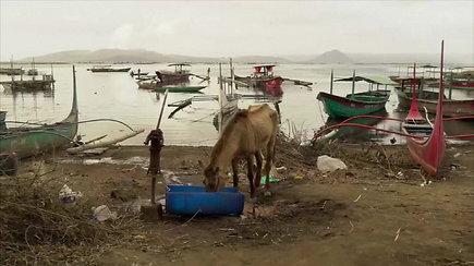Ugnikalnis Filipinuose grėsmingai spjaudosi pelenais: iš salos traukiasi ir žmonės, ir gyvūnai