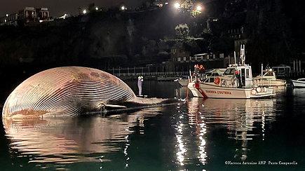 Gelbėtojai liko apstulbę – prie didžiulio nugaišusio banginio juos atvedė išsigandęs jauniklis