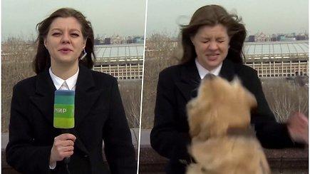 Kuriozas tiesioginiame eteryje – pro šalį bėgęs šuo pasigriebė reporterės mikrofoną