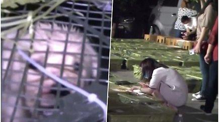 Iš košmaro išgelbėjo 160 gyvūnėlių – buvo laikomi siuntinių dėžėse, pardavinėjami internetu ir siunčiami po visą šalį