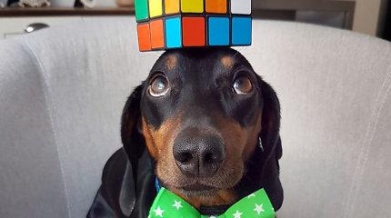 """""""Instagram"""" vartotojus žavi šuns talentas – balansuoti objektus ant galvos"""