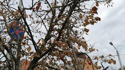 Baltupių gyventojai negali atsistebėti: šaligatvius tvarko, o medžius žaloja