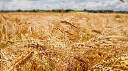 Šalyje trūksta vagonų žemdirbių derliui išvežti