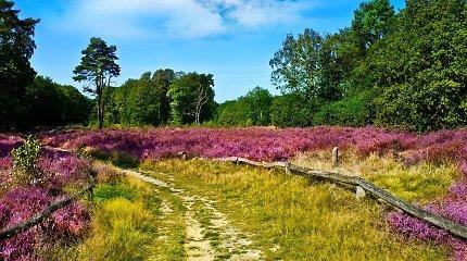 Nuodingi augalai kelia pavojų lietuvių sveikatai