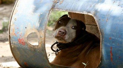 Ministrai – prieš kovinių ir pavojingų šunų bei jų mišrūnų sąrašo naikinimą