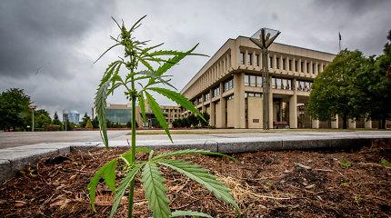 Kova su narkotikais: kaip stambūs kontrabandininkai teisiami net moksleiviai ir vėžininkai