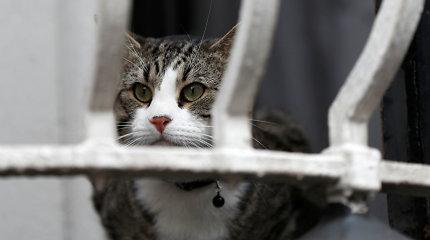 Ekvadoras paragino J.Assange'ą prikąsti liežuvį ir rūpintis savo katinu