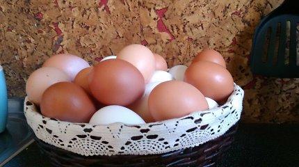 """Biomedicinos mokslų daktarė – apie vištų lesalą, kiaušinius ir jų laikymą: """"Geriau naminiai, bet ir parduotuvinių vengti nereikia"""""""