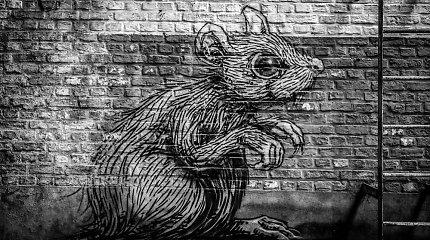 Mariaus Buroko knygų apžvalga: pilkosios Vilniaus pelės