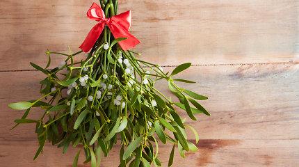 Amalas – kodėl po juo per Kalėdas bučiuojasi Vakarų pasaulis?