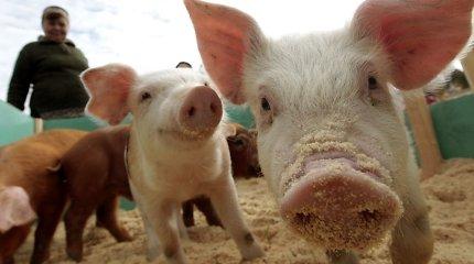 Fitoterapeuto V.Skirkevičiaus žinutė vegetarams: lietuviams reikia valgyti kiaulieną